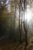 Jesień w lesie Fotografia Royalty Free