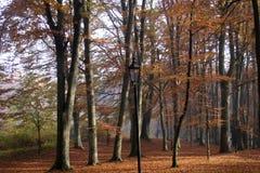 Jesień w lesie Zdjęcia Stock
