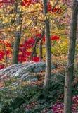 Jesień w lesie Fotografia Stock