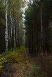 Jesień w lesie Zdjęcie Royalty Free