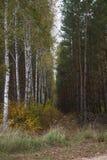 Jesień w lesie Obraz Royalty Free