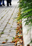 Jesień w miasto parku Obrazy Royalty Free