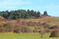 Jesień w naturze Obrazy Royalty Free