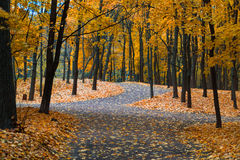 Jesień w Neskuchny ogródzie Zdjęcie Royalty Free