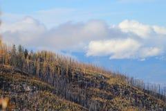 Jesień W Okanagan Zdjęcia Stock