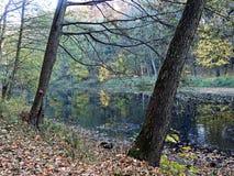 Jesień w parku Zdjęcie Stock