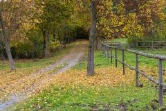 Jesie? w parku Hessenpark, Hesse, Niemcy zdjęcie royalty free