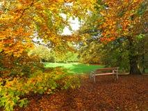 Jesień w parku z ławką Fotografia Royalty Free