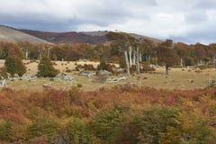 Jesień w Patagonia, Chile Obrazy Royalty Free