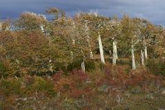 Jesień w Patagonia, Chile Obraz Royalty Free
