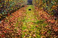 Jesień w sadzie zdjęcia royalty free