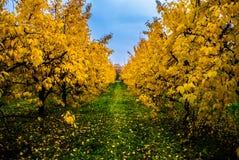 Jesień w sadzie obraz stock