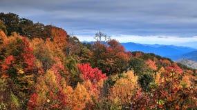 Jesień w Smokies Obraz Royalty Free