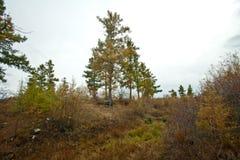 Jesień w Syberia Obraz Stock