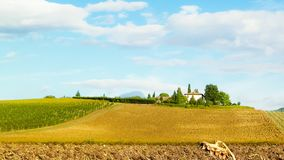 Jesie? w Tuscany - pole wysuszeni s?oneczniki obraz royalty free