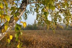 Jesień w wiosce Obraz Stock