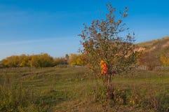 Jesień w wiosce Zdjęcia Royalty Free