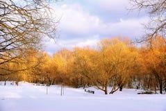 Jesień w zimie fotografia stock