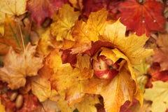 Jesień wakacje Obrazy Stock