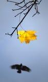 jesień wiatr obrazy royalty free