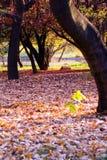 jesień widok Zdjęcie Royalty Free