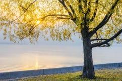 Jesień widok bulwar Zaporoska rzeka Obraz Stock