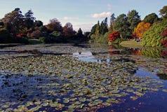 jesień widok jeziorny wiejski Zdjęcie Stock