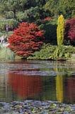 jesień widok jeziorny wiejski Zdjęcie Royalty Free