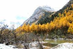 Jesień widoki Bipengou w Sichuan Obraz Royalty Free