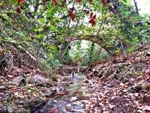 Jesień widoki w lesie fotografia stock