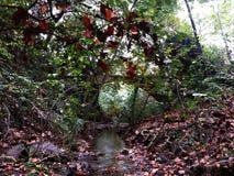 Jesień widoki w lesie obrazy stock