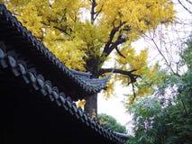 Jesień widoku Yu ogród Zdjęcia Royalty Free