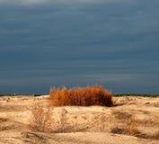 Jesień wieczór w pustynia piasku Zdjęcia Royalty Free