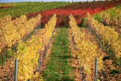 jesień winnica Fotografia Stock