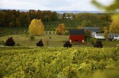 jesień winnica Obrazy Royalty Free