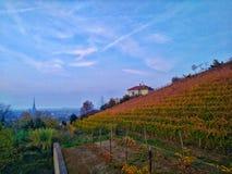 Jesień winnica nad miastem Zdjęcie Royalty Free