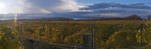 Jesień winnica panoramiczny Obrazy Royalty Free