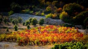 Jesień winogradu czerwieni krajobraz France Zdjęcia Stock