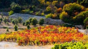 Jesień winogradu czerwieni krajobraz France Fotografia Royalty Free