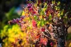 Jesień winogradu czerwieni krajobraz France Obrazy Royalty Free