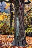 Jesień wizerunek, osamotniony drzewo Fotografia Stock