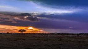 Jesień wschód słońca Oland, Szwecja Obraz Royalty Free