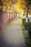 Jesień wspominki Zdjęcia Stock