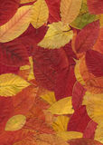 jesień wzór Obrazy Royalty Free