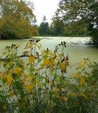 Jesień Zielonym stawem Obraz Stock
