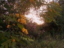 Jesień zmierzch w Alhaurin de losie angeles Hiszpania Obraz Royalty Free