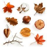 Jesień złomowi elementy Zdjęcia Royalty Free