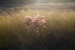 jesienią łąki zdjęcia royalty free