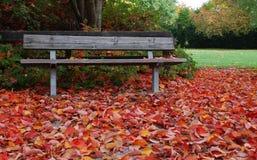 jesienią ławki parku Obraz Stock