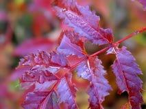 jesienią łzy Zdjęcie Stock